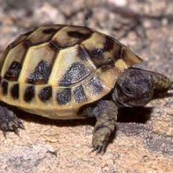 82667_9589_tortue