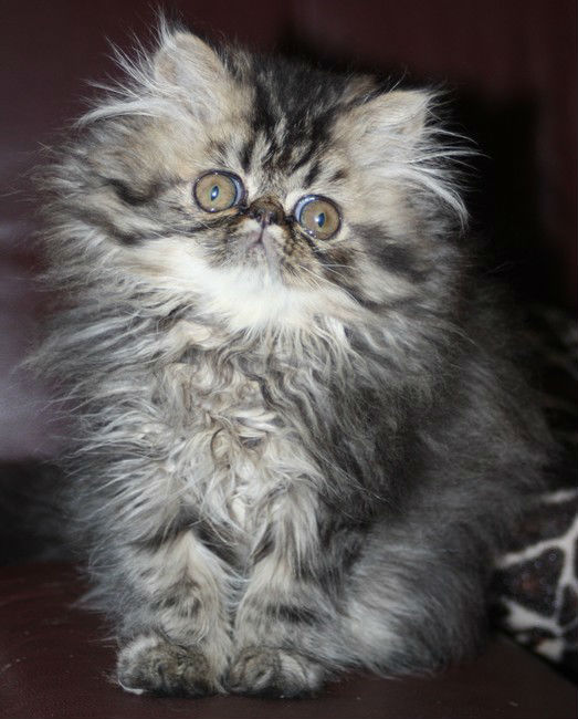 chatons dyna 18072014 078